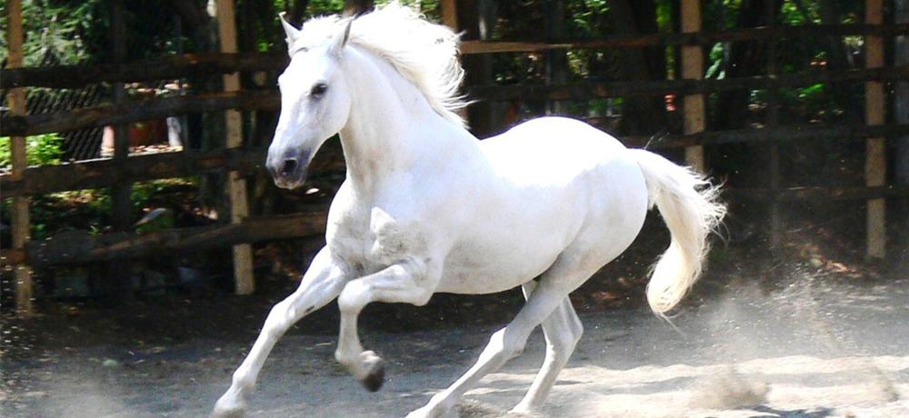 gibt es in star stables die 2 pferderassen schimmel und grey connemara pony spiele online. Black Bedroom Furniture Sets. Home Design Ideas