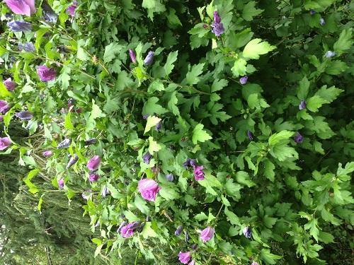 Pflanze - (Garten, Pflanzen, Blumen)