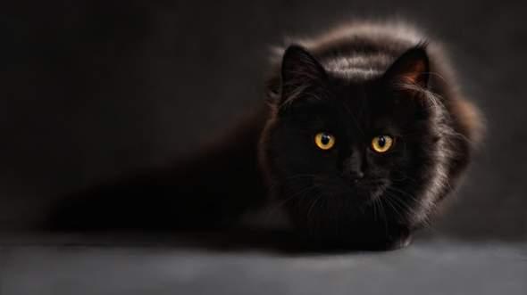 Glaubst du an den ''Schwarzen Katzen'' Aberglauben?