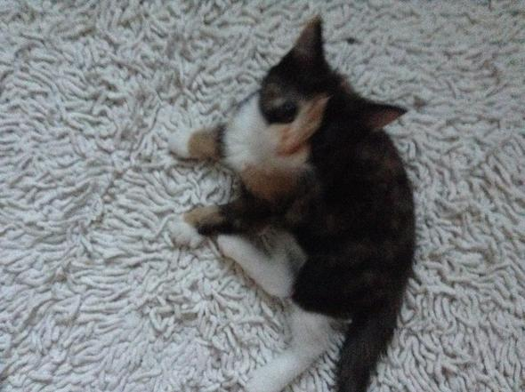 Meine Katze  - (Tiere, Katzen, Erziehung)