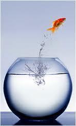 Das Glas :) - (Glas, Goldfische)