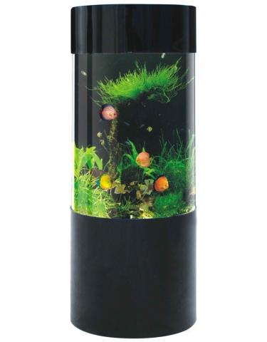 goldfische in 336 liter zylinder aquarium. Black Bedroom Furniture Sets. Home Design Ideas