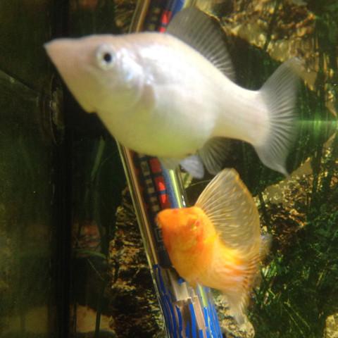 Ich weiss halt nicht was für fische das sind und bei welchen Temperaturen  - (Fische, Aquarium, Warmwasser)