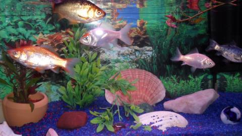 Goldfische sind wei farbe fische for Bunte goldfische