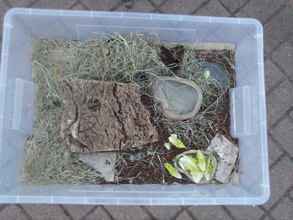 schildkröte oben mittich - (Tiere, Haustiere)