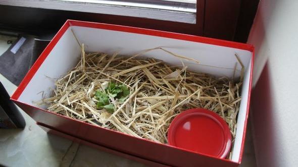 Schuhkarton - (Tiere, Haustiere, Schildkröten)
