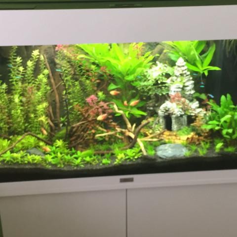 Mein Aquarium  - (Aquarium, Süßwasserfische, 125 Liter Becken)