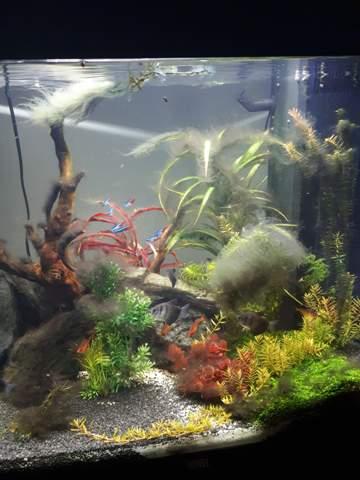 Aquarium Schimmel