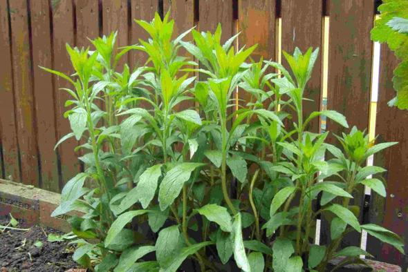 Pflanze - (Garten, Pflanzen, Frühling)