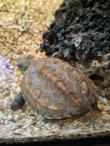 - (Schildkröten, gruene-punkte)