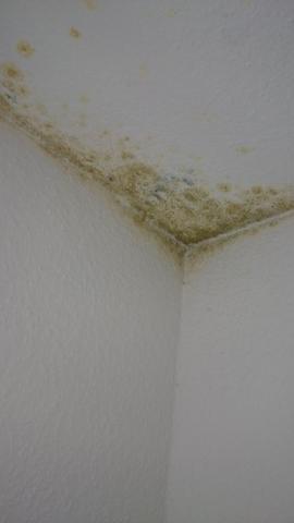 Grüner Schimmel auf Tapete (Feuchtigkeit)