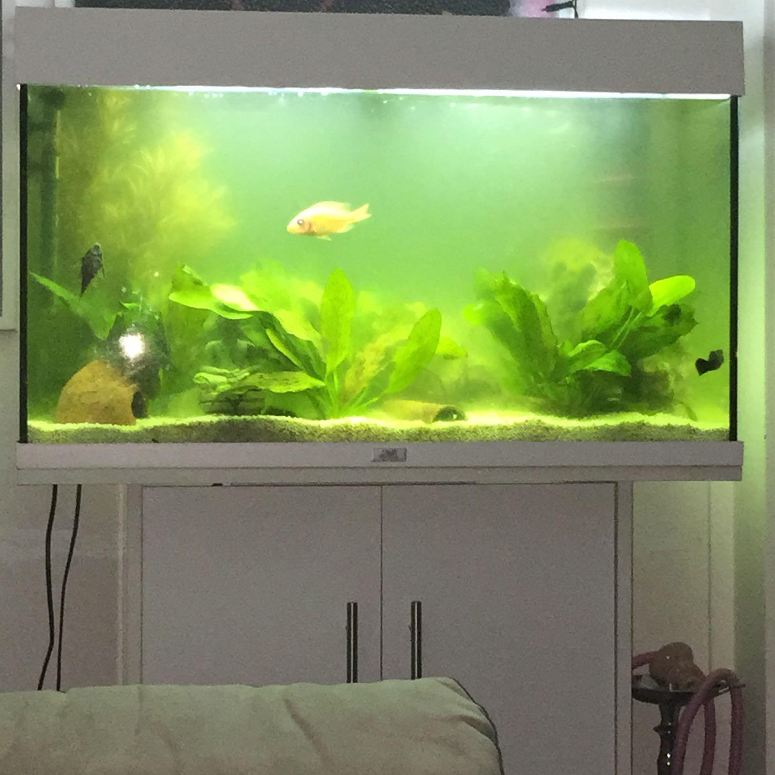 gr nes aquarium was tun wasserwerte. Black Bedroom Furniture Sets. Home Design Ideas