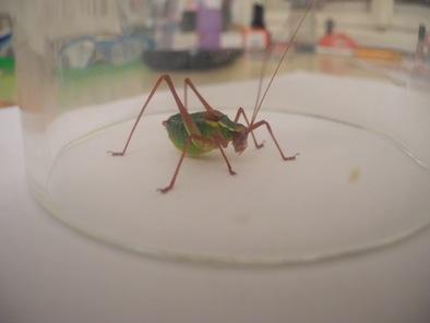 Bild 1 - (Tiere, Biologie, Insekten)