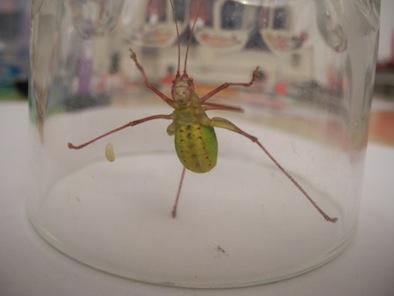 Bild 2 - (Tiere, Biologie, Insekten)