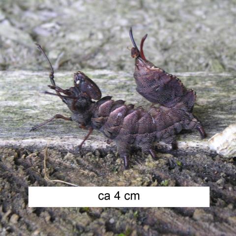 Insekt im Profil - (Tiere, Biologie, Insekten)