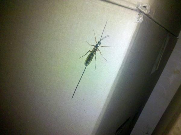 gruseliges insekt im keller insekten ungeziefer. Black Bedroom Furniture Sets. Home Design Ideas