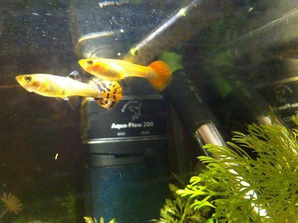 bild 2 - (Tiere, Fische, Aquarium)