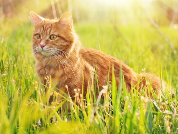 1 Katze  - (Katzen, Namen, RPG)