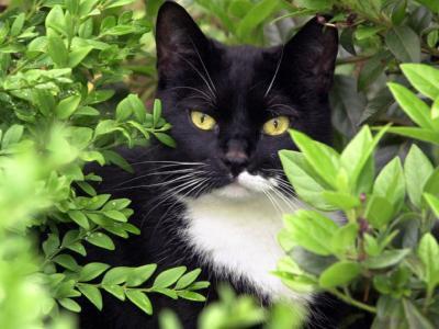 2 Katze  - (Katzen, Namen, RPG)