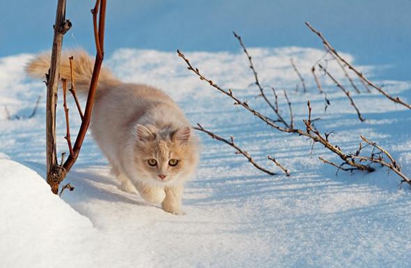 4 Katze - (Katzen, Namen, RPG)