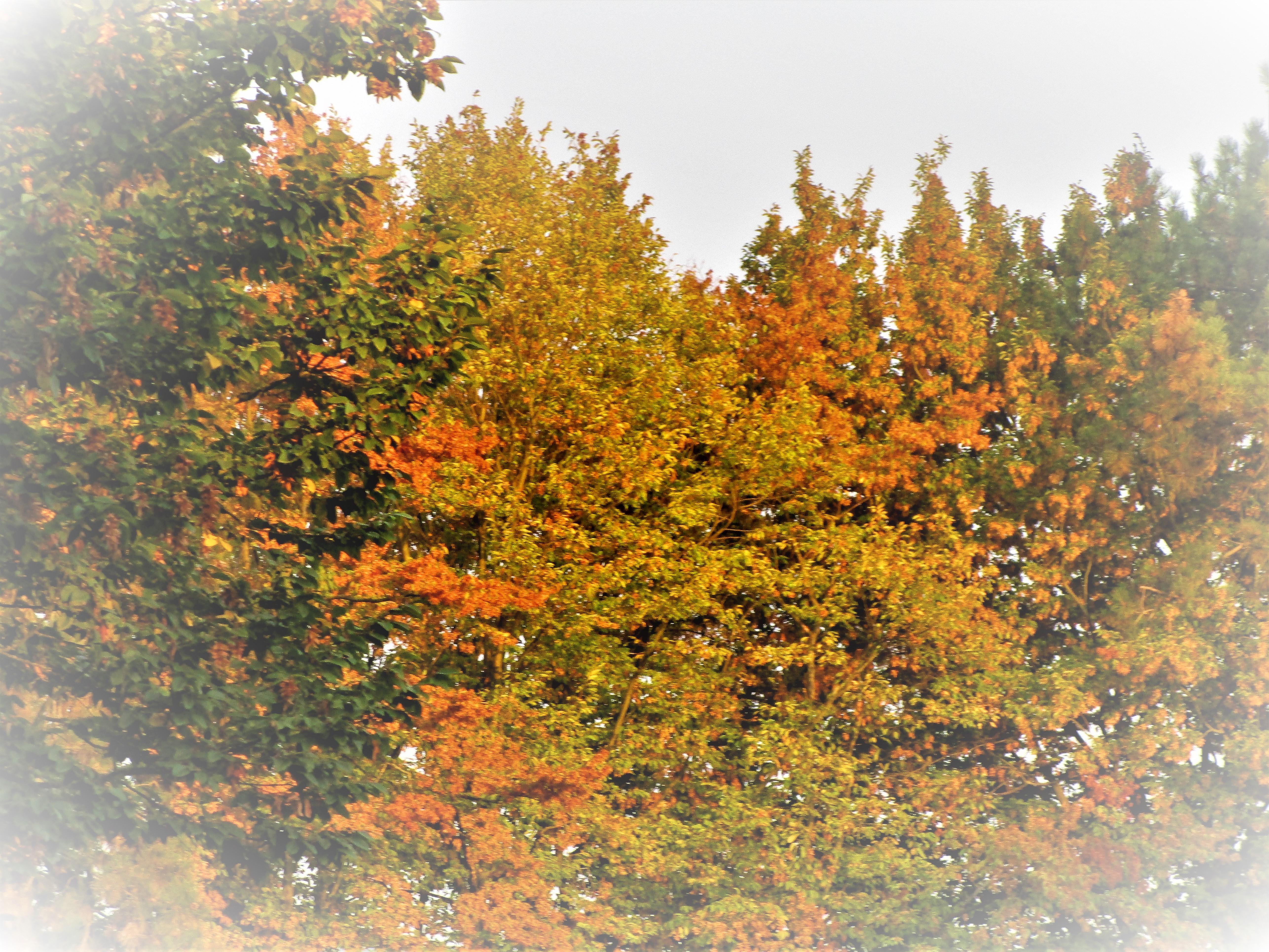 Guten Morgen Ihr Lieben Was Inspiriert Euch Im Herbst