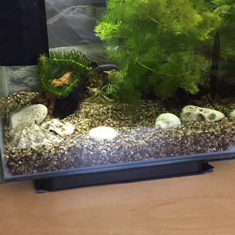 (Boden) - (Fische, Aquarium, Aquaristik)