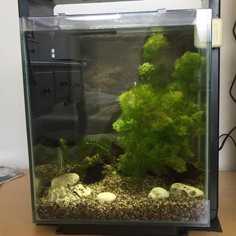 (Ganzes AQ)  - (Fische, Aquarium, Aquaristik)