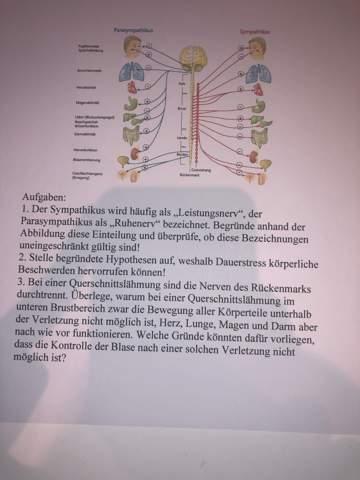 Hab ein paar Fragen zum vegetativen Nervensystem. Kann mir da jemand helfen?