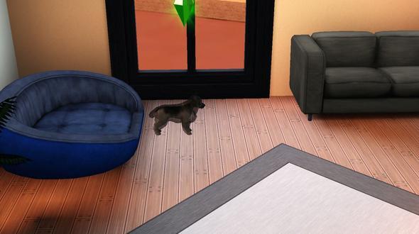 es stört mich irgendwie extrem - (Tiere, Fehler, Sims 3)