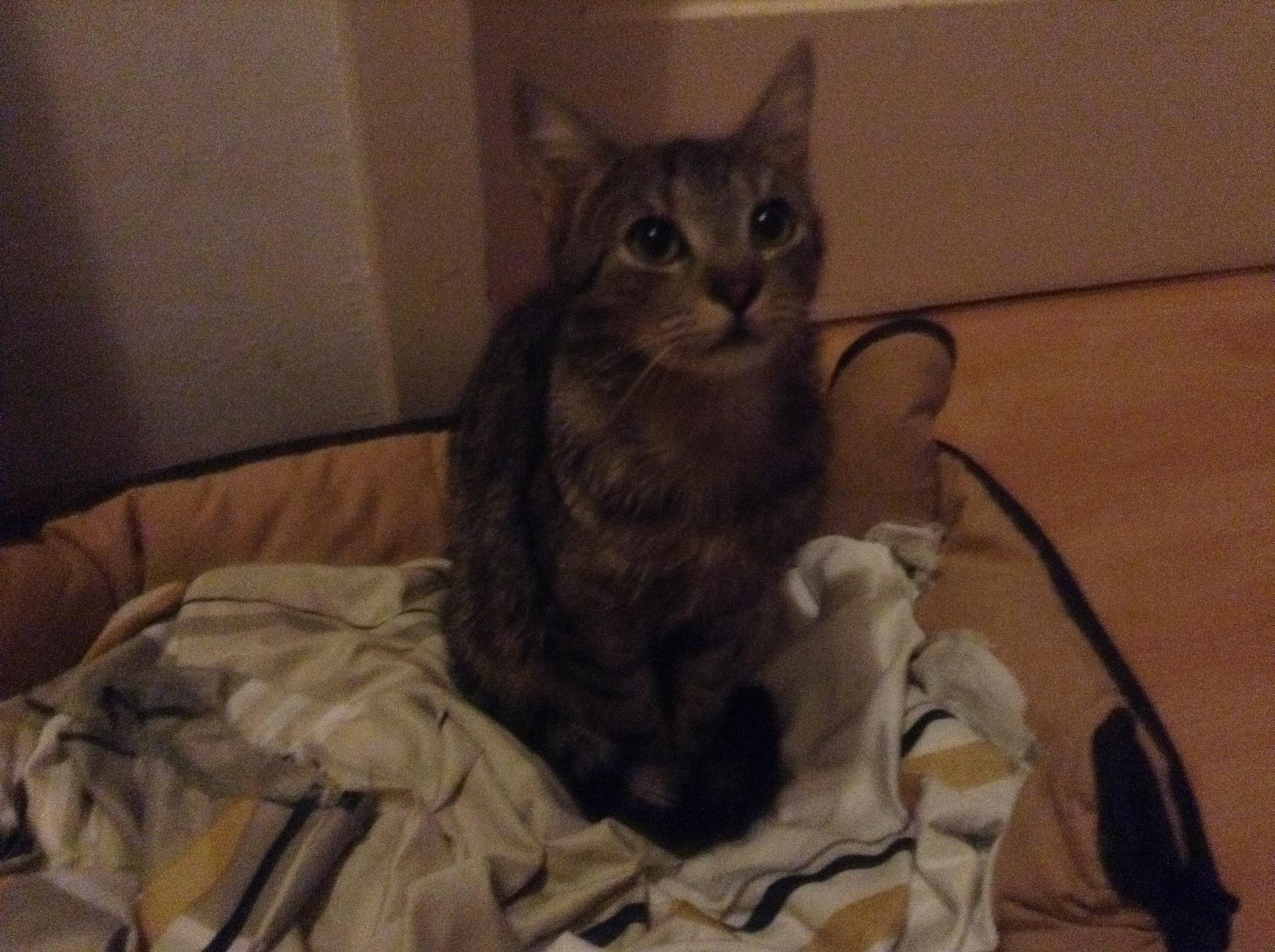 habe angst das mich meine katze nach dem urlaub nicht mehr kennt tiere katzen. Black Bedroom Furniture Sets. Home Design Ideas
