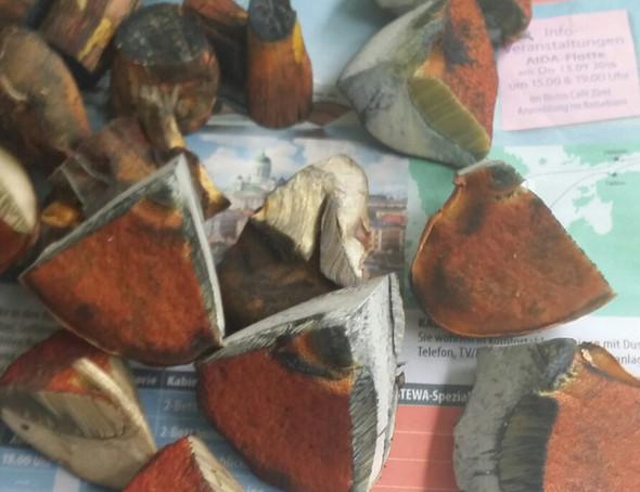 Pilz  - (Pilze, essbar)