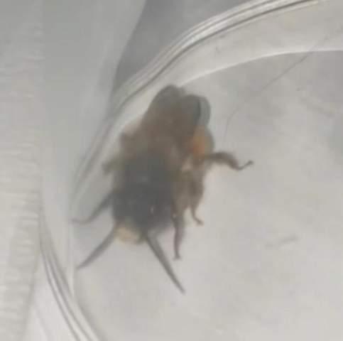 Habe glaube ich Bienennest vor Fenster, welche Art?