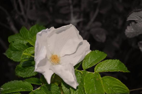 1. - (Pflanzen, Natur, Blumen)