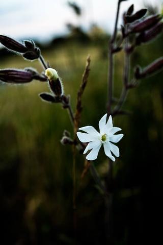 2. - (Pflanzen, Natur, Blumen)