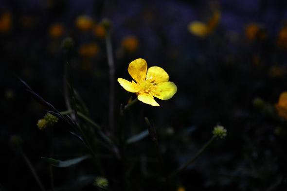 3. - (Pflanzen, Natur, Blumen)