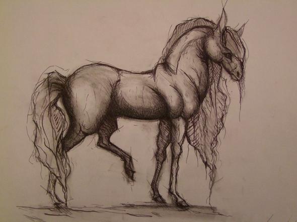 horse study - (Studium, Kunst, zeichnen)