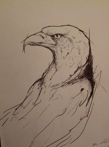 eagle study  - (Studium, Kunst, zeichnen)