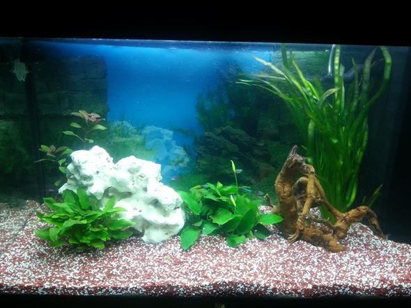 ganzes Becken - (Fische, Aquarium, Aquaristik)
