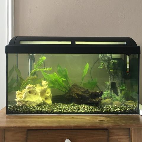 Hier ist das Aquarium  - (Fische, Aquarium)