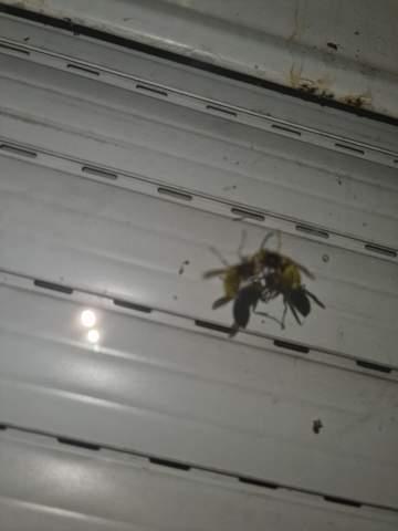 Haben diese Bienen gerade Sex xd?