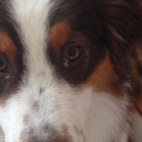 Geldlich dicke Pfropfen  - (Hund, Augen, Schlaf)