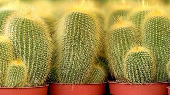 habt ihr einen kaktus?