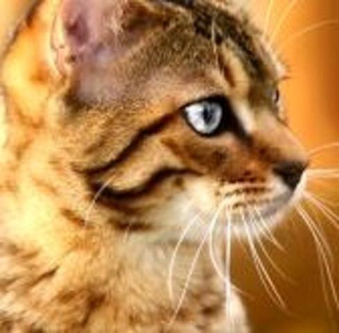 habt ihr sch ne warrior cats bilder die wie echte katzen aussehen sch nheit. Black Bedroom Furniture Sets. Home Design Ideas