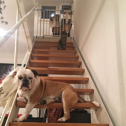 Beide auf der Treppe - (Tiere, Hund, Katze)