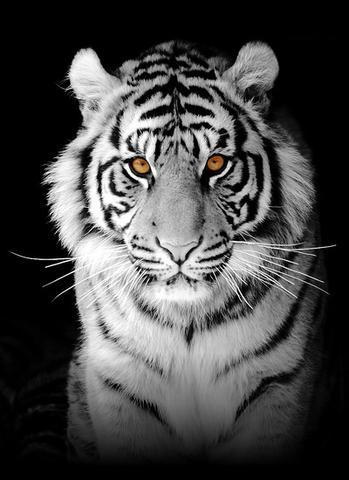 h lfte vom gesicht als tiger bilder bearbeiten gimp. Black Bedroom Furniture Sets. Home Design Ideas