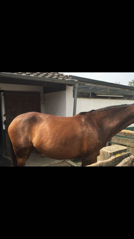 .. - (Pferde, Training, Bauch)