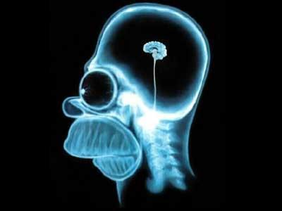 Homers Gehirn - (Menschen, Wissen, Philosophie)