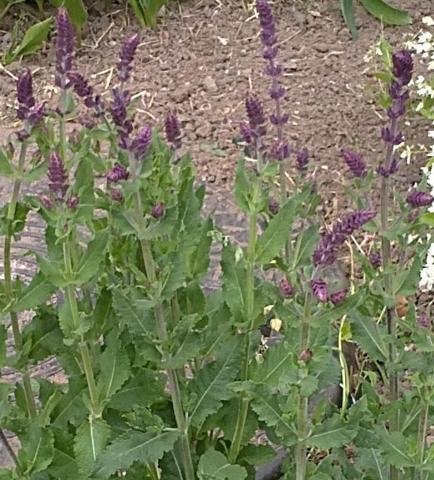 Bild 1 - (Garten, Pflanzen, Blumen)