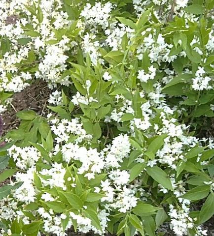 Bild 2 - (Garten, Pflanzen, Blumen)
