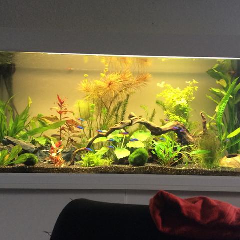 hallo community br uchte hilfe zwecks aquarium pflanzen aquaristik. Black Bedroom Furniture Sets. Home Design Ideas